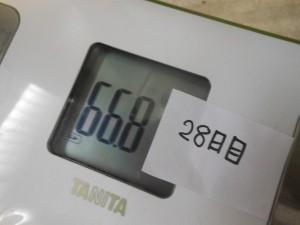 28日目の体重